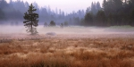 mist_meadow-web-900