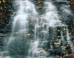 Cascade, Fallen Leaves